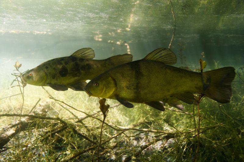 Un mot sur l'écologie des poissons